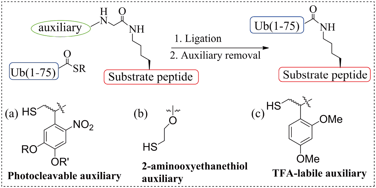 Recent advances in the chemical synthesis and semi-synthesis of poly
