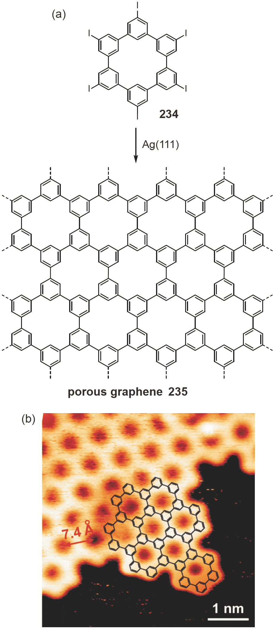 Polycyclic aromatic hydrocarbons in the graphene era